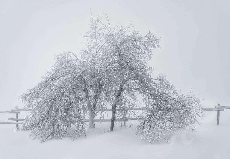Der letzte Schnee II