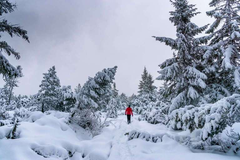 Winterspatziergang