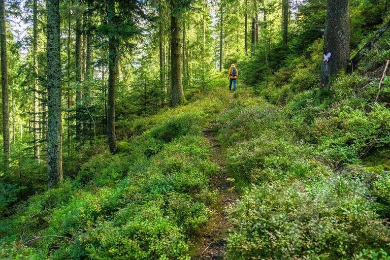 Schmaler Pfad im Wald