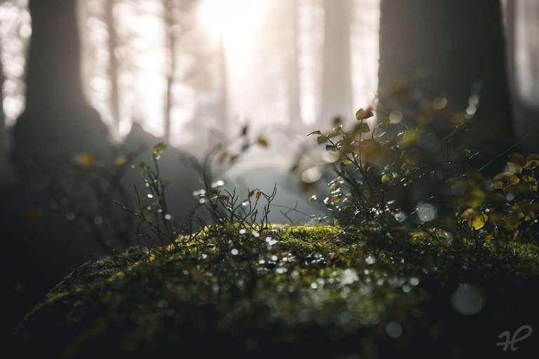 Moos im Schwarzwald