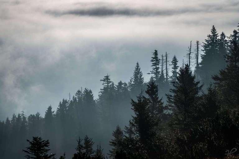 Silhouette des Schwarzwalds