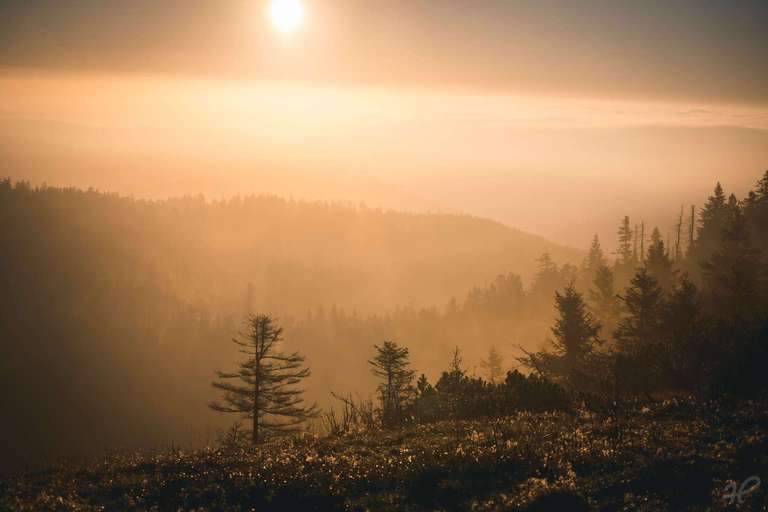 Sonnenaufgang bei Nebel im Schwarzwald
