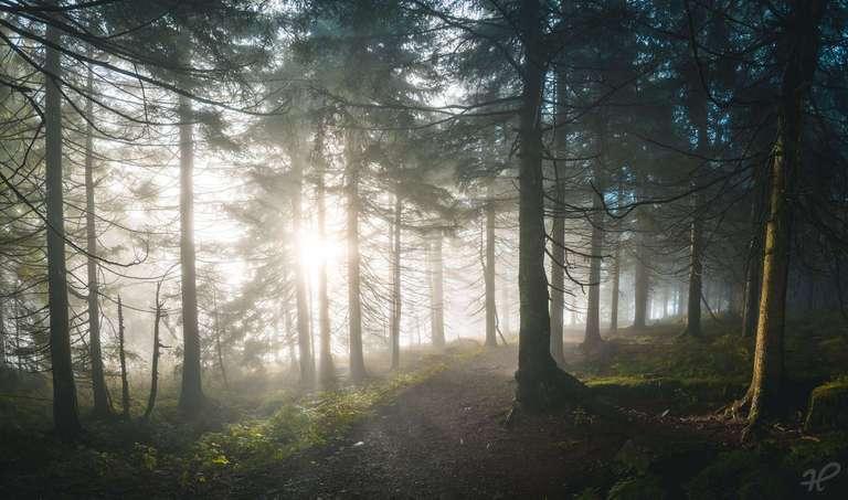 Nebelstimmung im Schwarzwald
