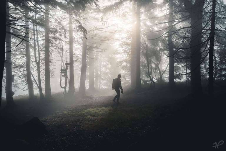 Wanderer im Nebelwald