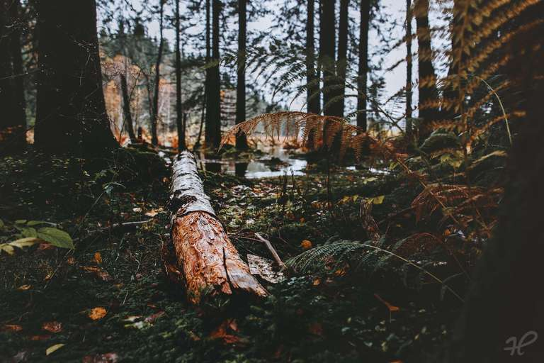 Herbstfarben am Windgfällweiher