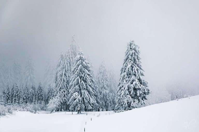 Tiefer Winter auf dem Schauinsland