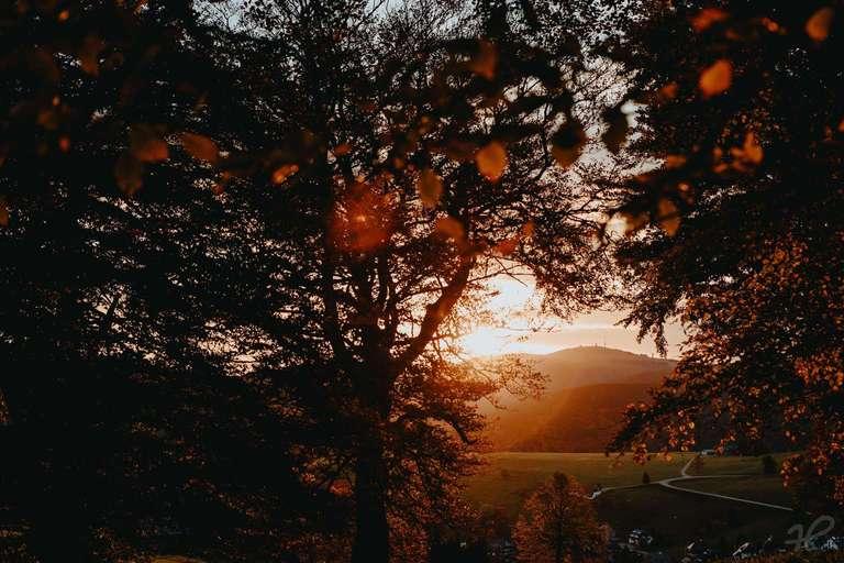 Goldener Herbst Morgen