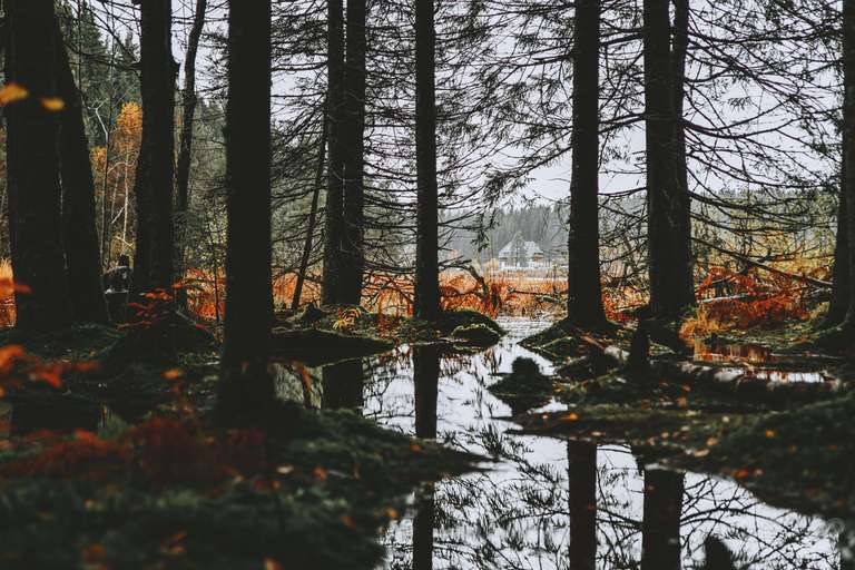 Spiegelung am Windgfällweiher