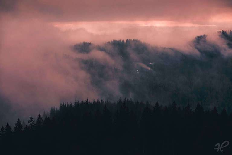 Moody Black Forest 2