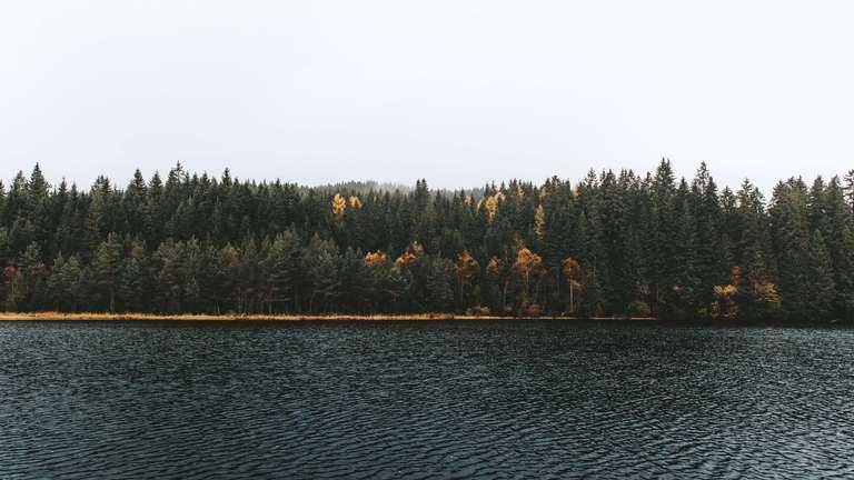 Herbst am Windgfällweiher