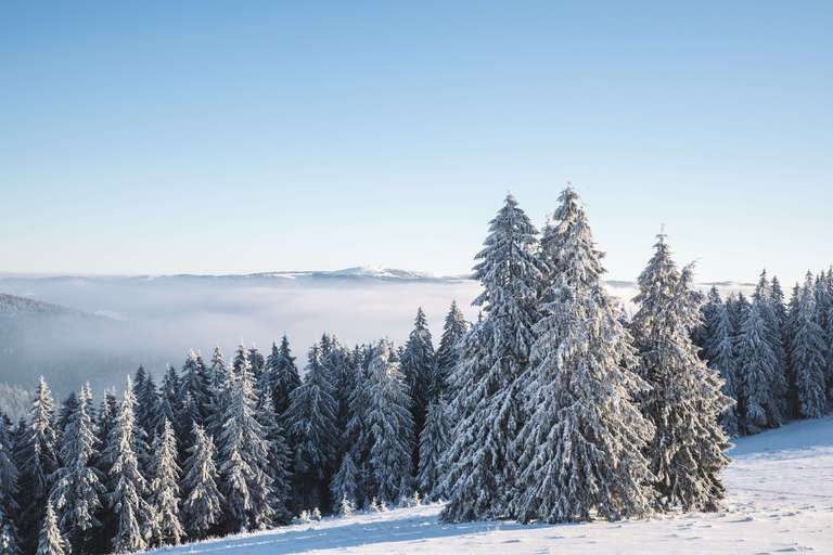 Wintertraum mit Feldbergblick