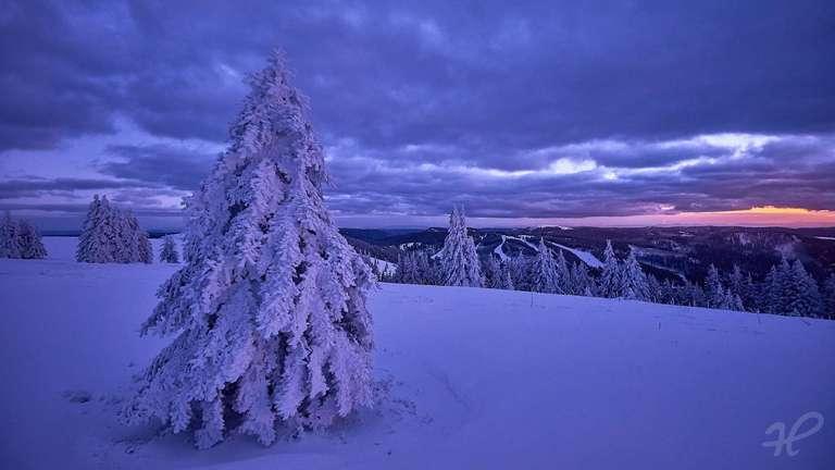winterlicher Tannenbaum