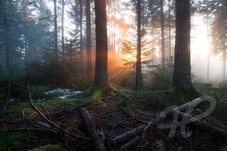 mystischer Schwarwald