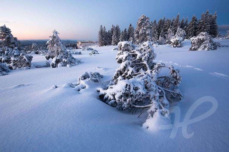 Winterlandschaft auf dem Schliffkopf