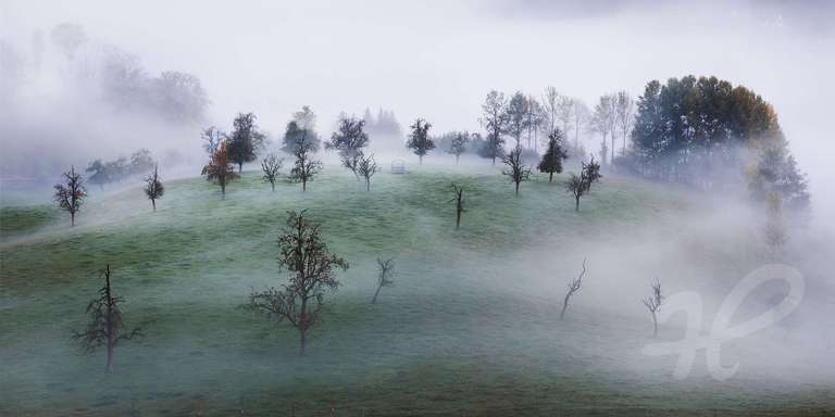 Nebelmorgen im Schwarzwald