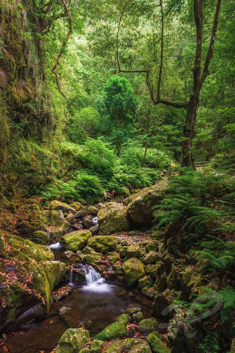 Lorbeer-Wald auf Madeira