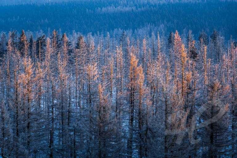 Winterlandschaft im Harz