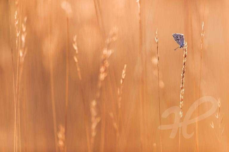 Schmetterling an einem Sommermorgen