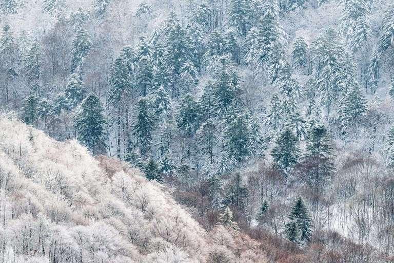 Winter in den Vogesen