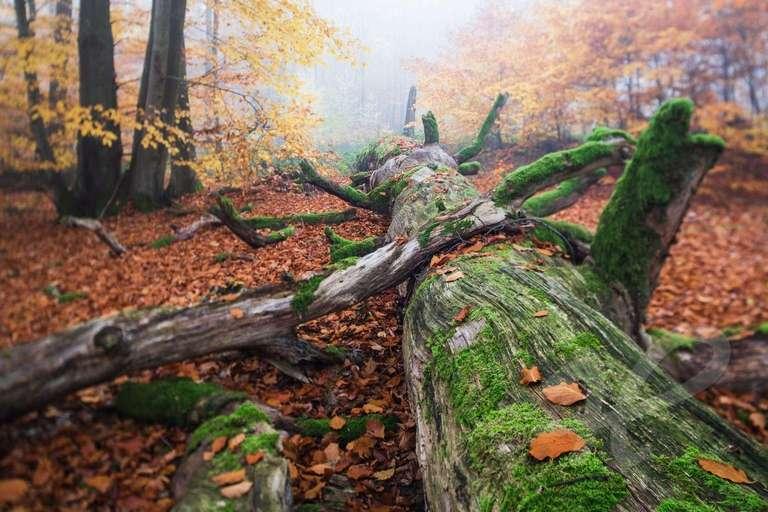 Bemooster Baumstamm im Herbstwald