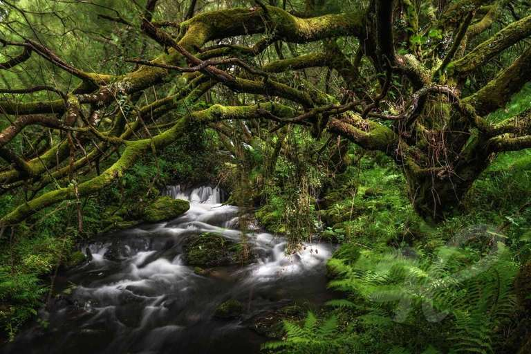 Bachlauf in Snowdonia