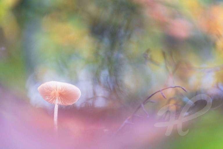 Pilz am Waldboden