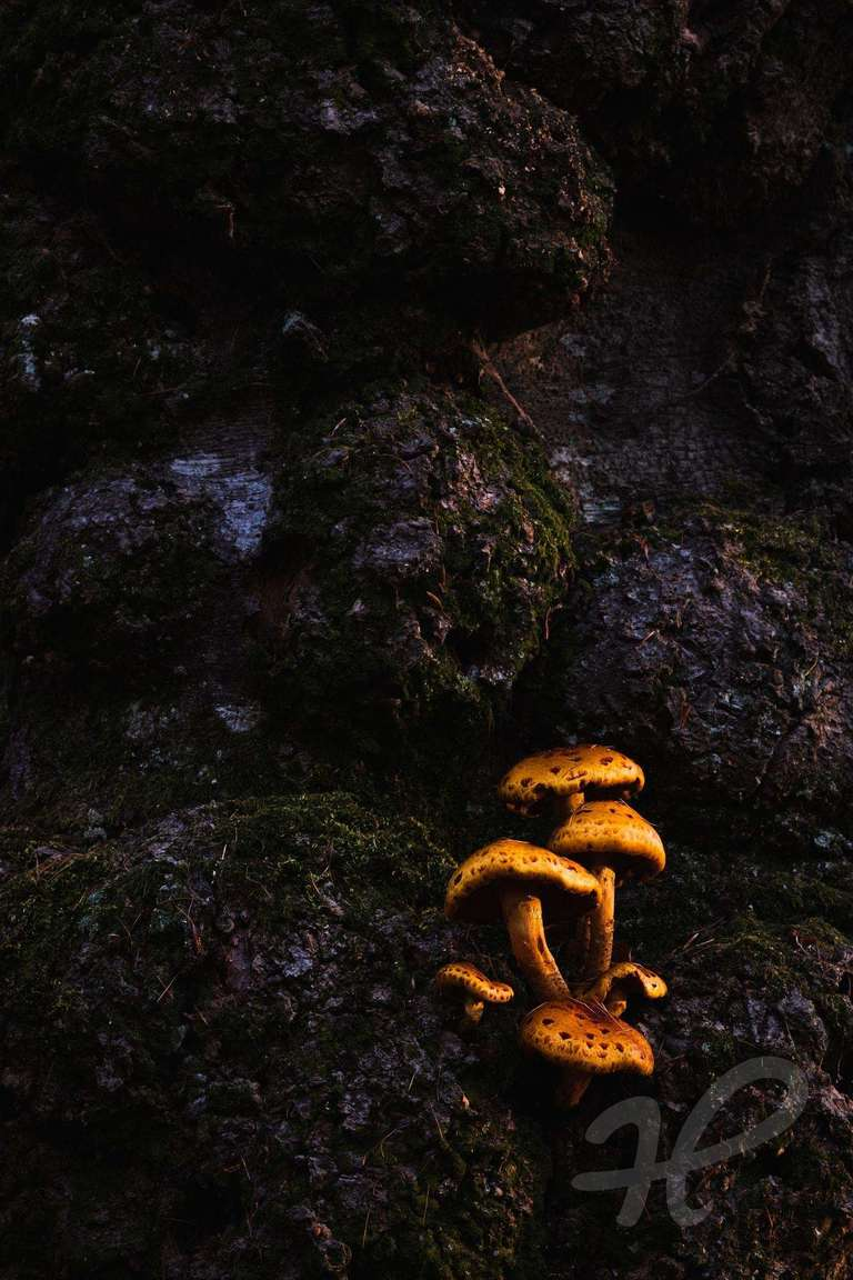 Pilze auf einem Baumstamm