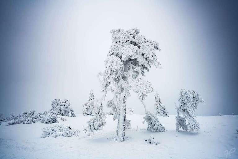 Schwarzwald Baum im Schnee