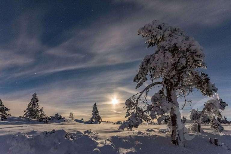 Wenn der Vollmond die Schneebäume glitzern lässt