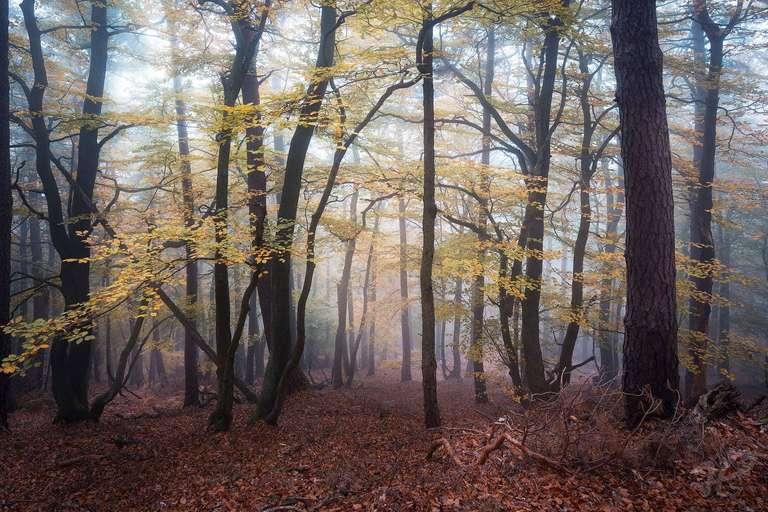 Nebelmorgen im Pfälzerwald