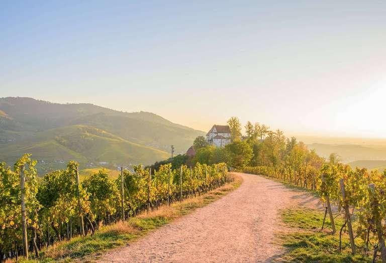 Durbacher Schloss mit Weinreben im Sonnenschein
