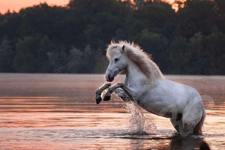 Steigendes Pferd im See