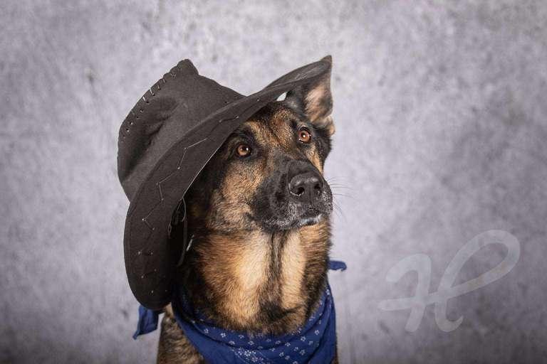 Schäferhund als Cowboy