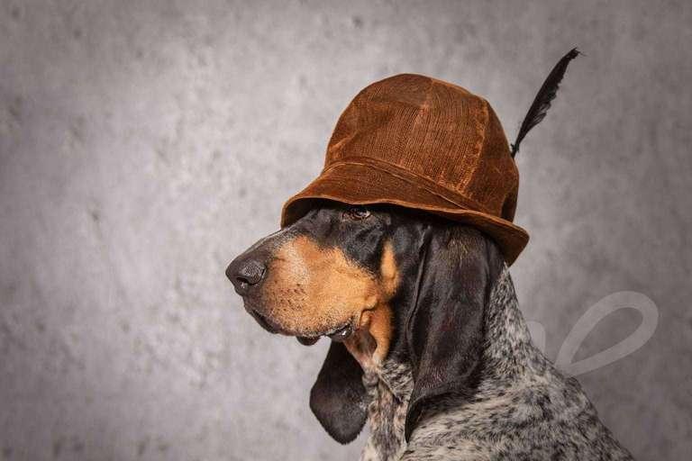Jagdhund mit Hut