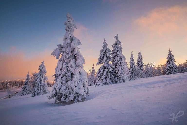 Winter auf dem Kandel I