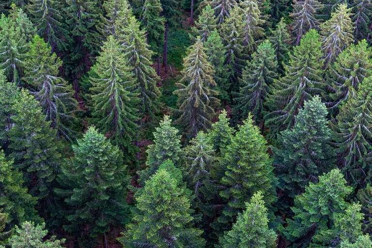Bäume von oben von der WildLine in Bad Wildbad