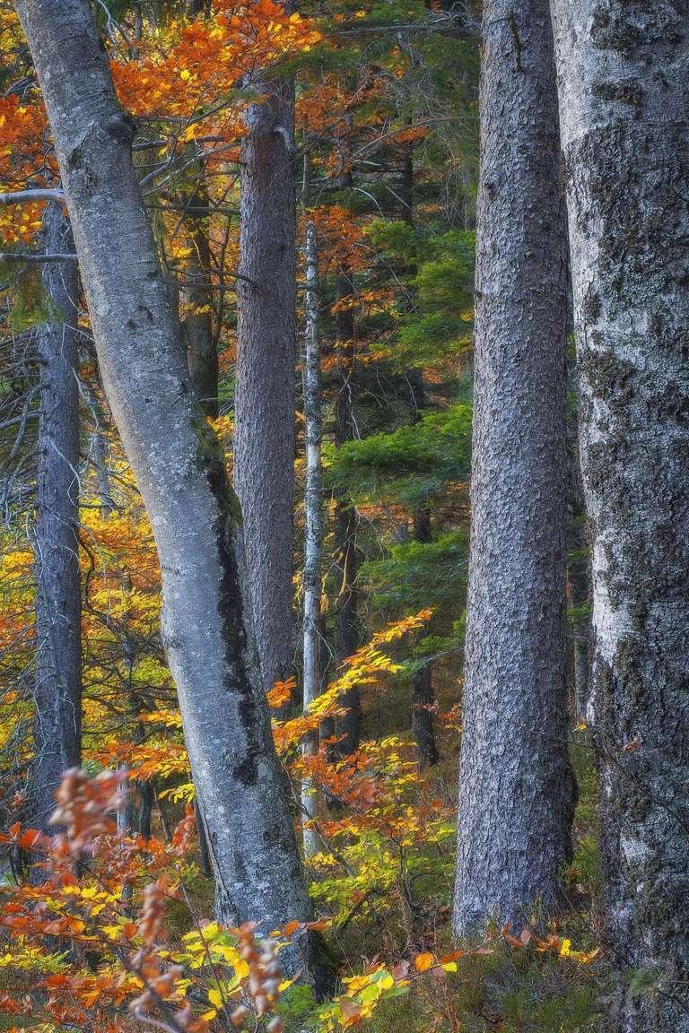 Lebendiger Herbst-Wald