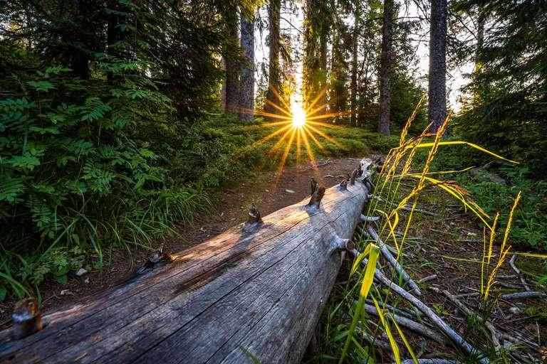 Morgenstimmung im Bannwald