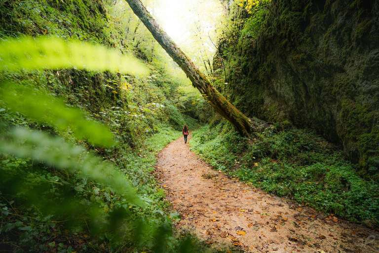 Der Schwäbische Dschungel
