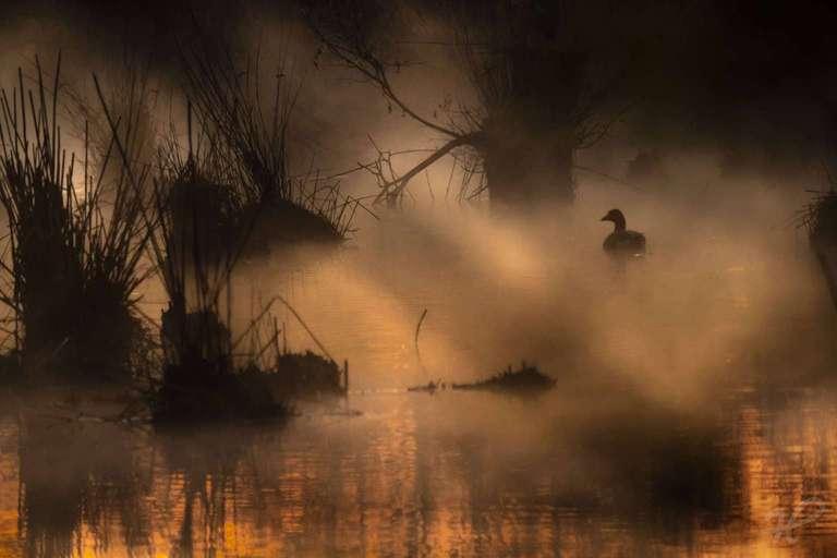 Ente früh morgens