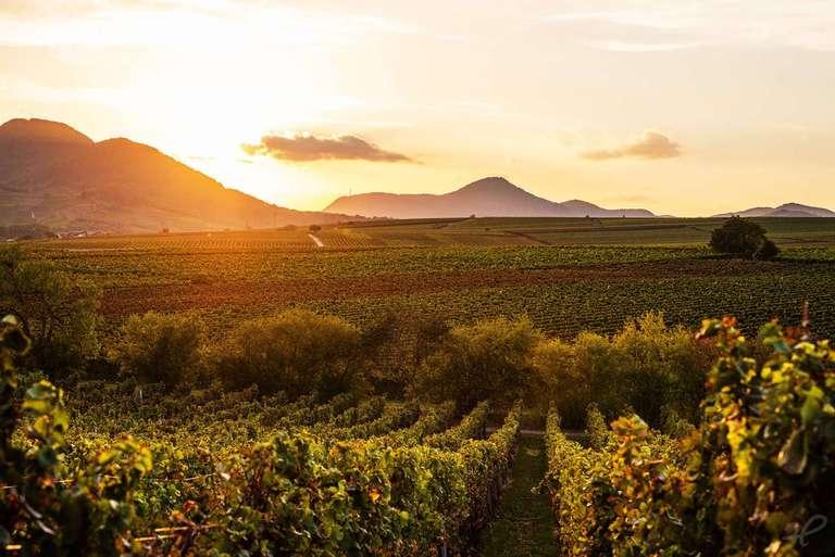 Weinlandschaft der Pfalz