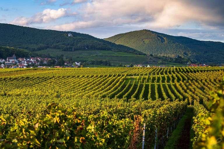 Weinlandschaft Pfalz