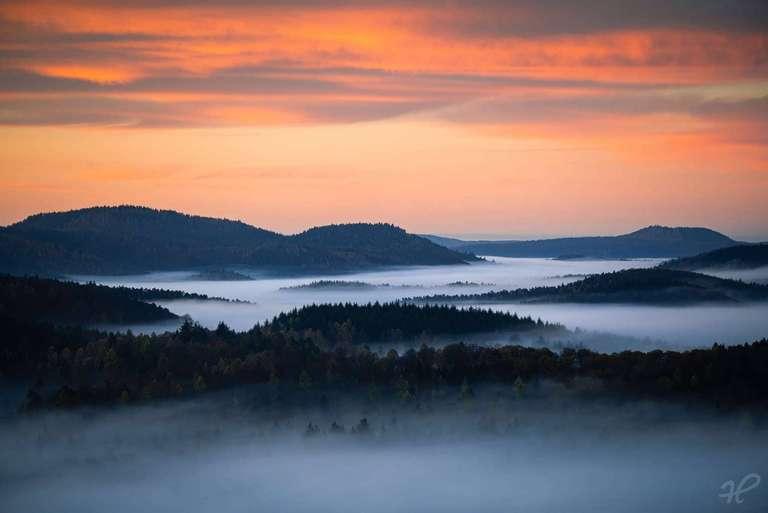 Nebelmeer Pfälzerwald