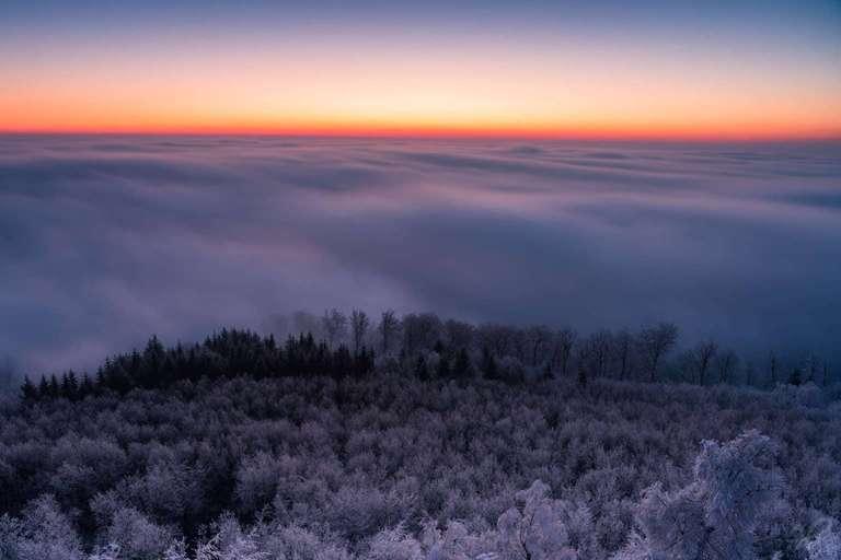 Nebelwelle über dem Wald