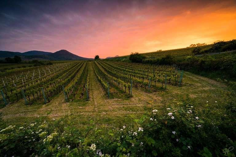 Abendrot über den Weinbergen
