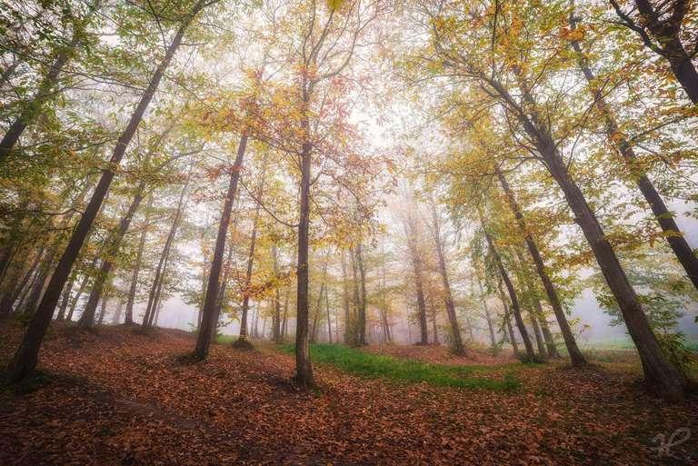 Nebel im Wald - Pfälzerwald