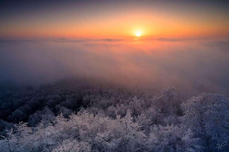 Nebelwelten Pfälzerwald