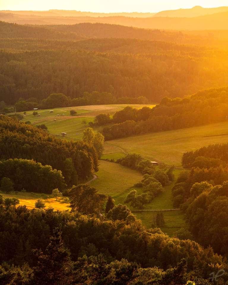 Goldene Stunde im Pfälzerwald