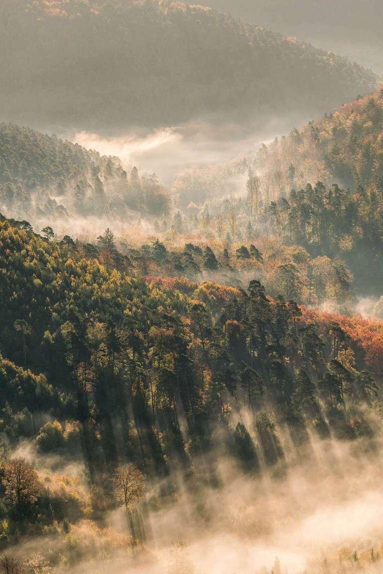 Nebel trifft Bäume