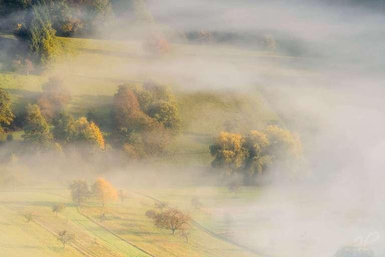 Nebel zwischen den Wiesen